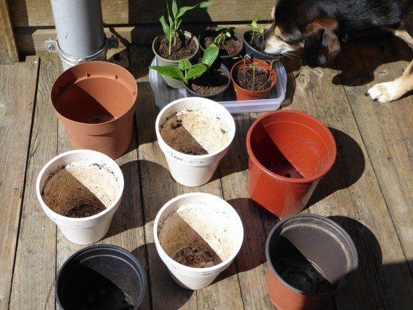 Plantjes overpotten