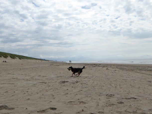 Honden Wijk aan Zee