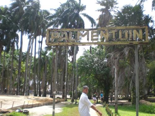 Palmentuin Parimaribo