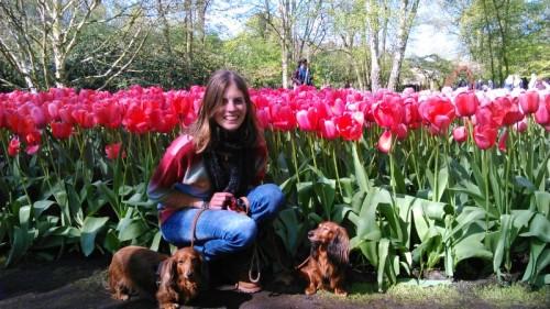 Hondjes in de tulpen.