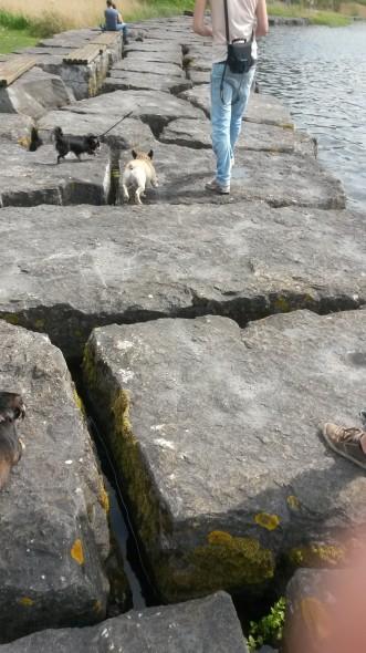 Hondjes over rotsen
