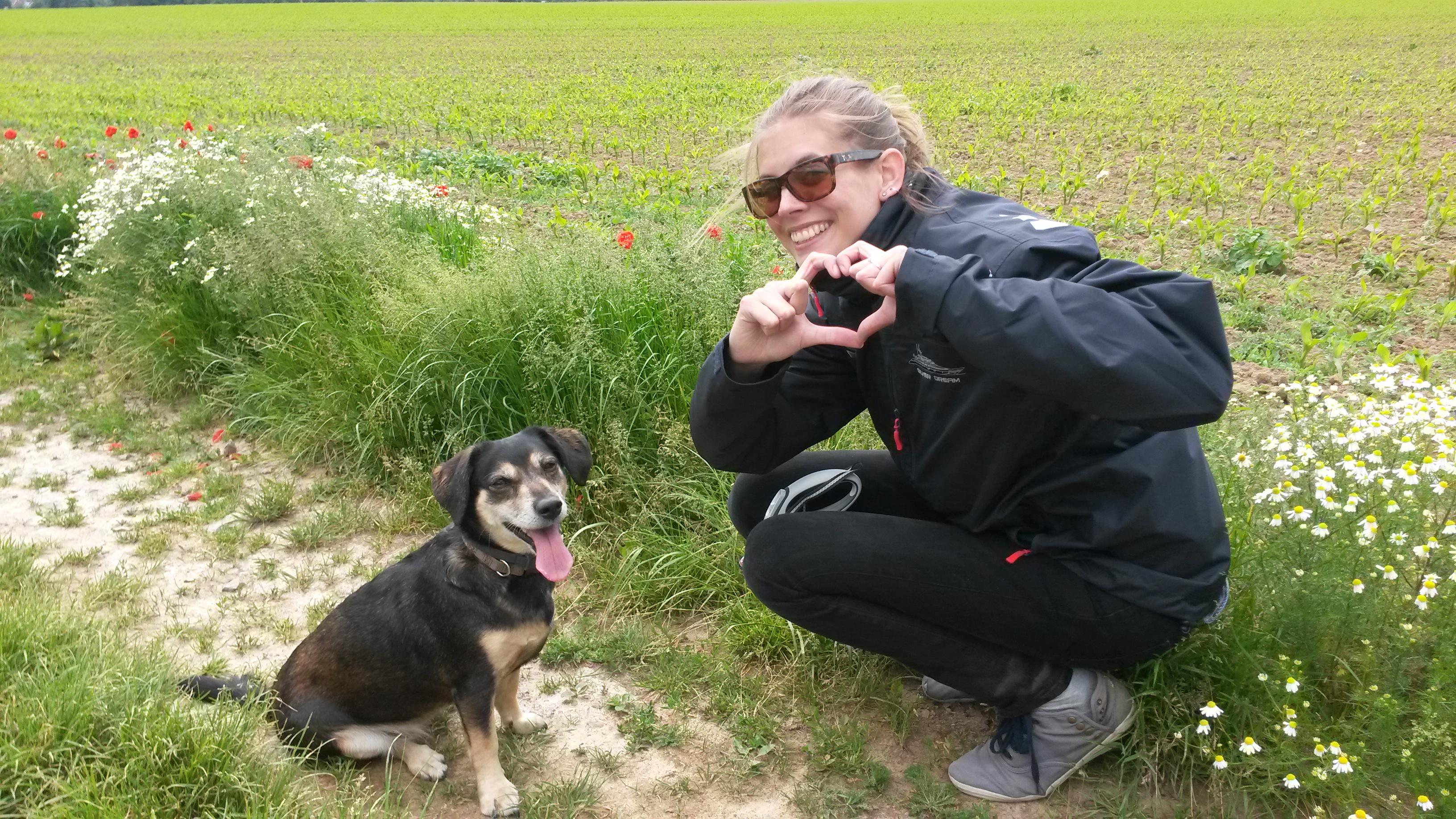 Hondje Adopteren