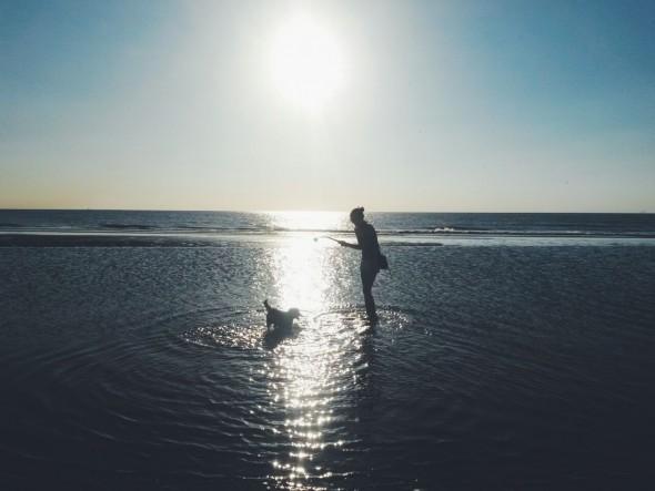Asiel hondje op strand