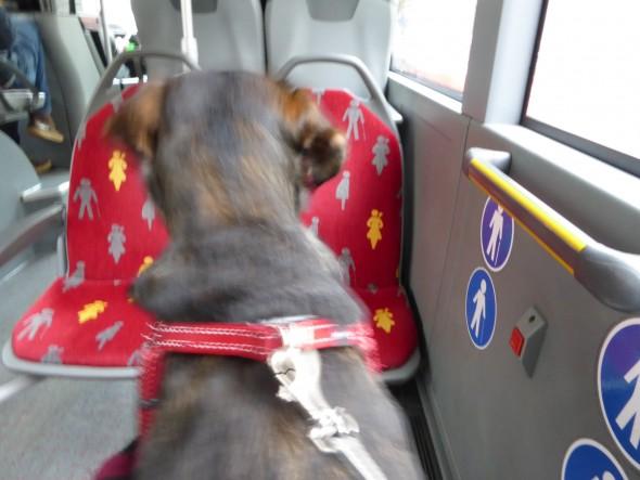 Hond in bus