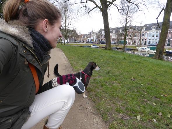 Hond in stadspark