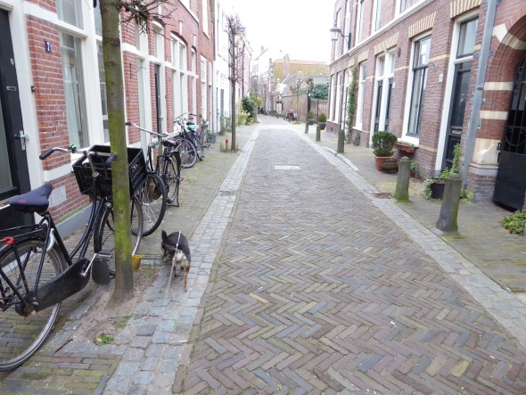 Hond in Haarlem