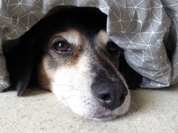 Moe hondje