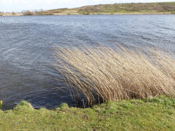 Wind in het water