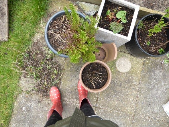 Kruiden tuin