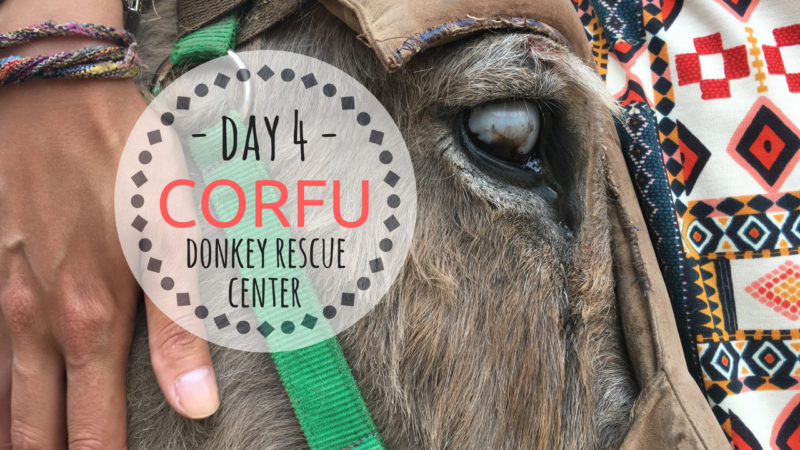 CORFU donkey rescue vlog
