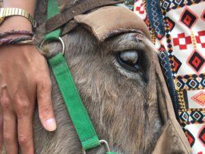 Korfoe ezel rescue