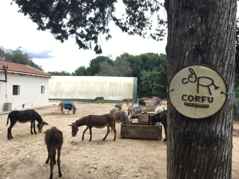 Corfu donkey rescue center