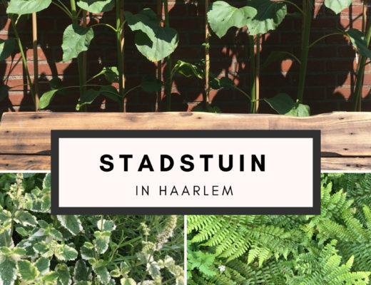Stadstuin in Haarlem
