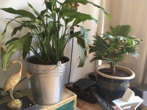 Kamerplanten favorieten