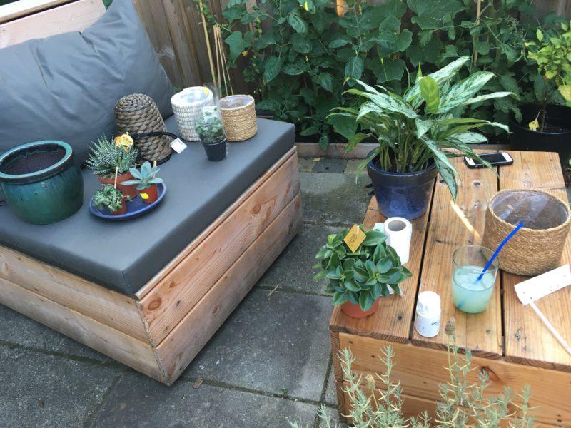 nieuwe kamerplanten obsessie