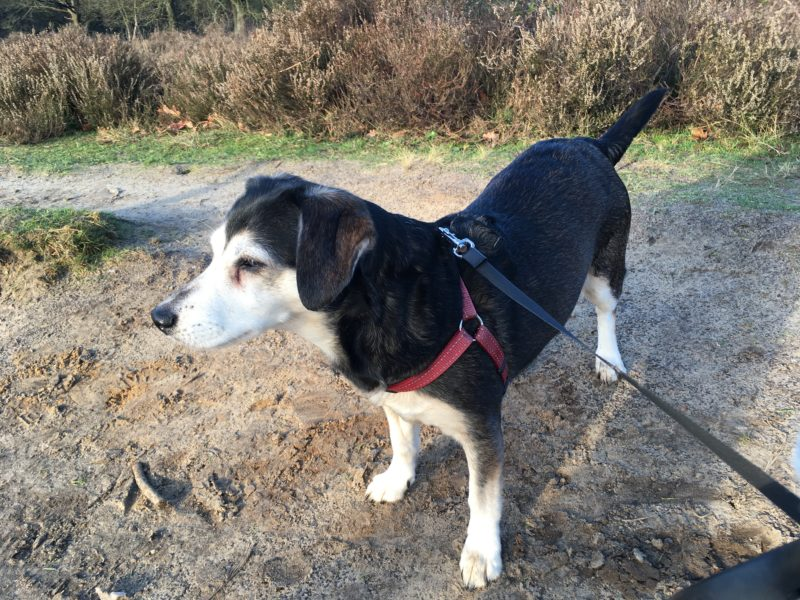 Hond in Drenthe